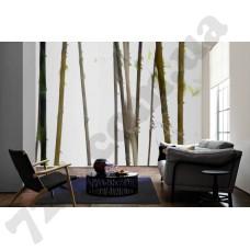 Интерьер Nature Артикул 036270 интерьер 3