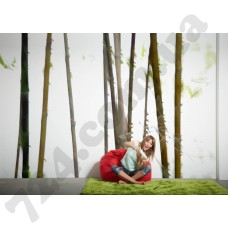 Интерьер Nature Артикул 036270 интерьер 4