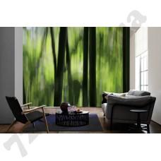 Интерьер Nature Артикул 036280 интерьер 3