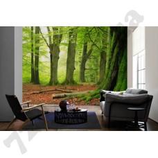 Интерьер Nature Артикул 036290 интерьер 3