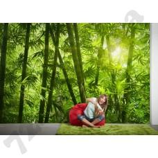 Интерьер Nature Артикул 036300 интерьер 4