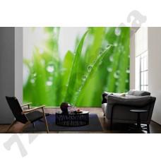 Интерьер Nature Артикул 036330 интерьер 3