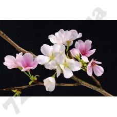 Артикул обоев: 00627 Цветущая вишня